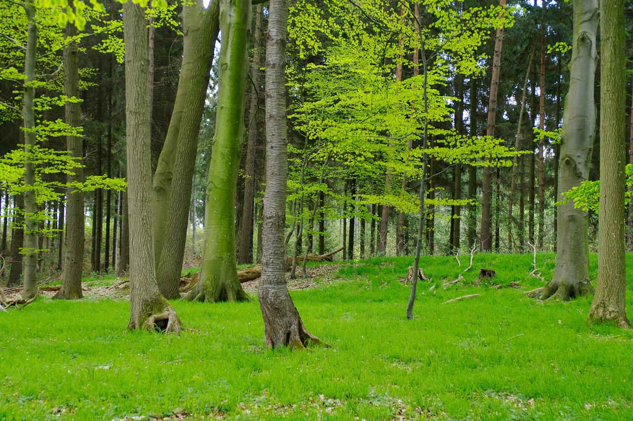 Waldstuck am trüben 7. Mai beim Plöner See