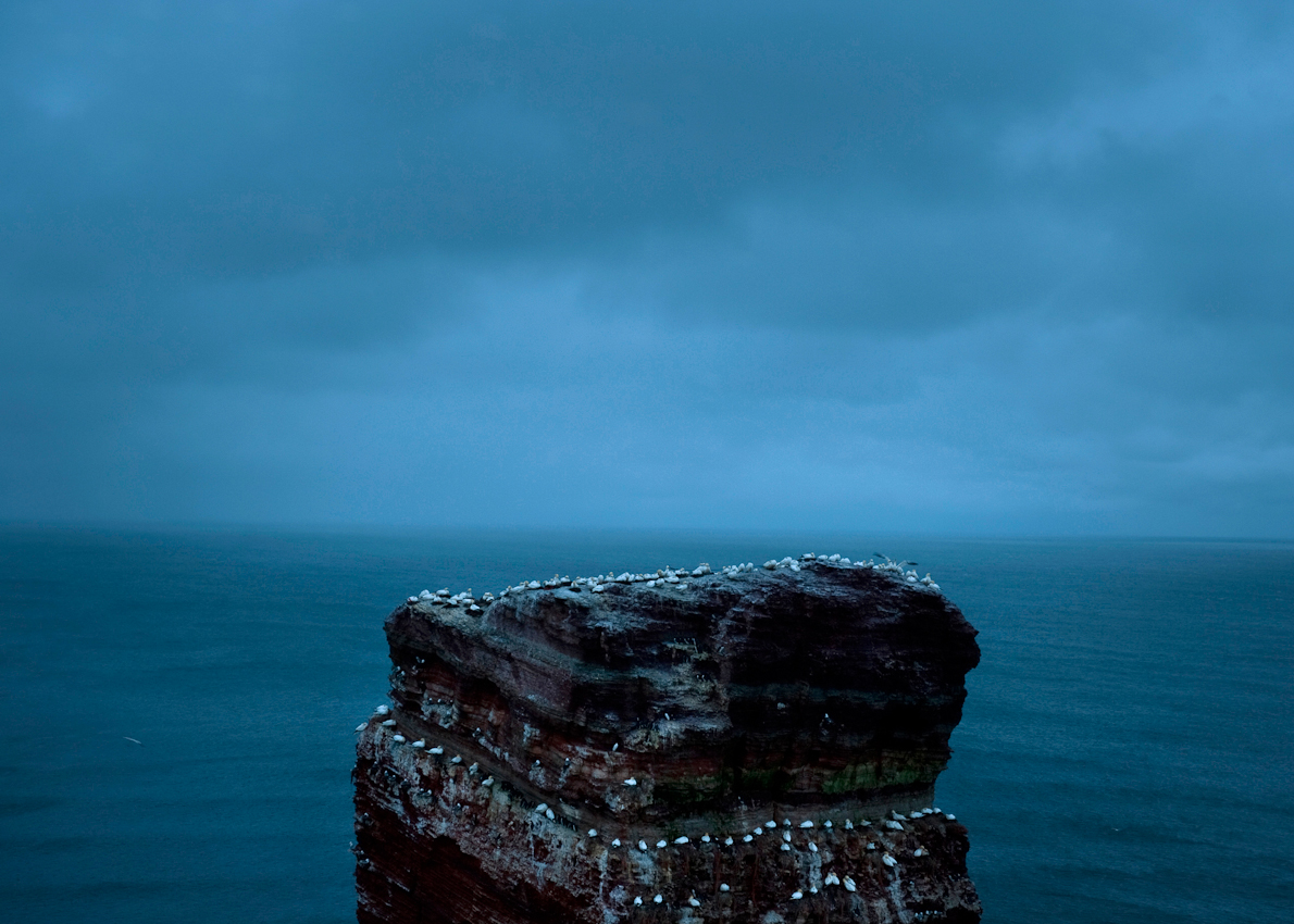 Helgoland, Land & Leute: Die Vogelkolonie auf der Spitze der Langen Anna,dem der Hauptinsel vorgelagerter Felsen, das Wahrzeichen Helgolands.