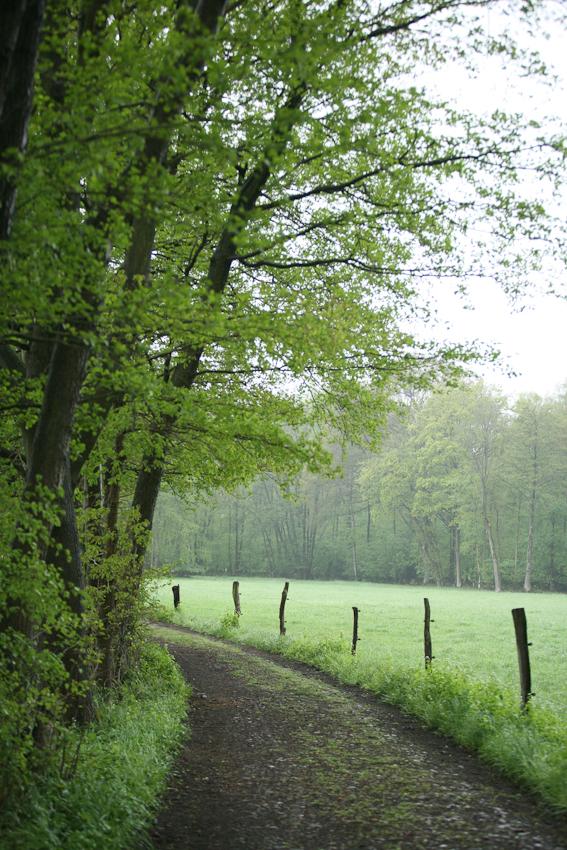 Dieser Feldweg befindet sich bei Maspe. Der Ort besteht aus acht Häusern, einem Pologestüt, einem Pferdehof und grenzt an den hinteren Teil des Golfparks Heinhaus. Die Aufnahme wurde am 07.05.2010 um 10.57 gemacht.