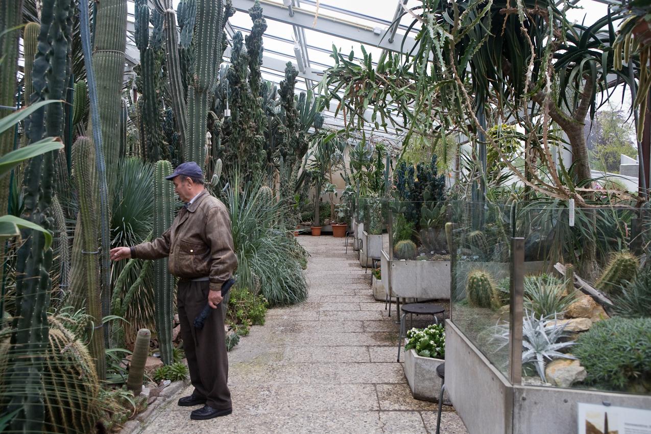 Im Berggarten der Herrenhäuser Gärten in Hannover betastet ein Besucher die Kakteen.