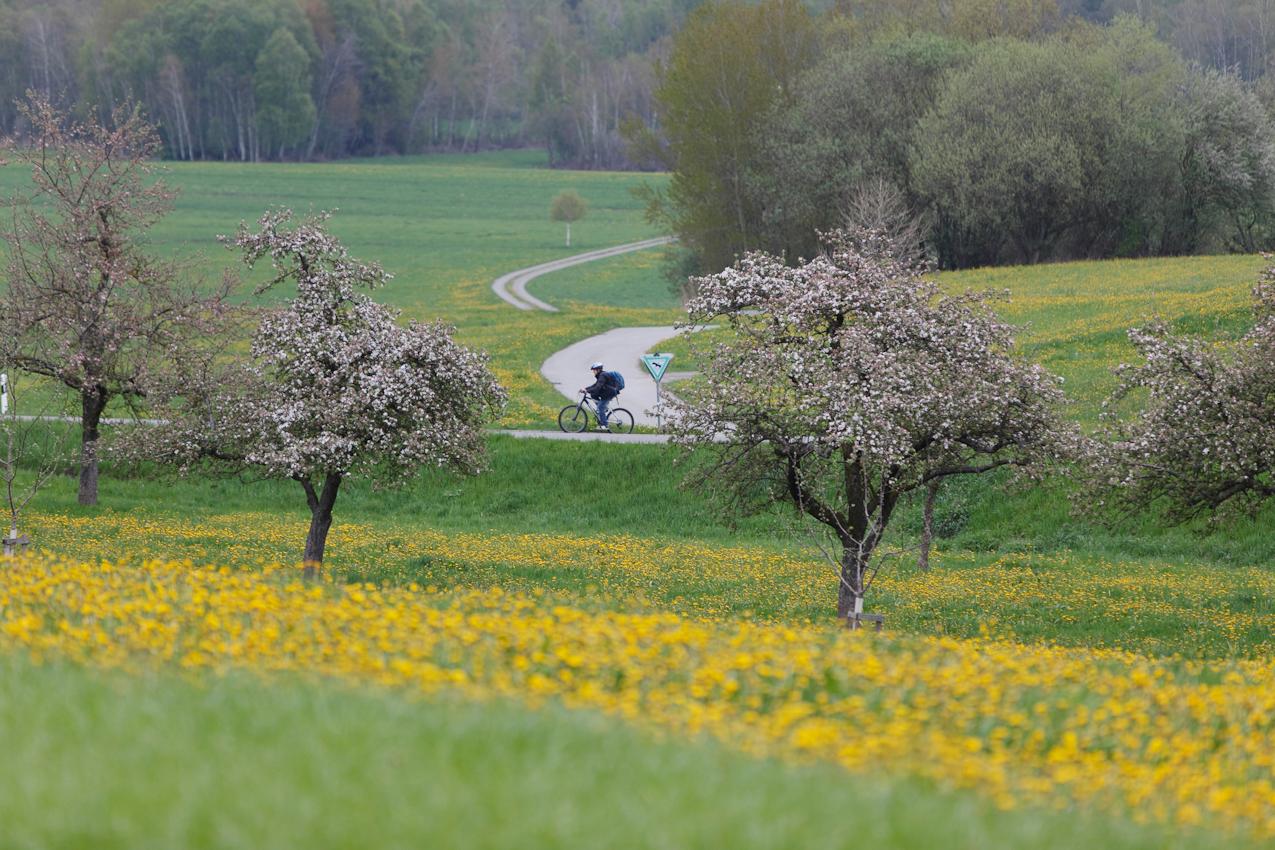 Das Pfrunger Burgweiler Ried ist ein großes Moorgebiet in Oberschwaben. Das Hochmoor ist weitgehend erhalten geblieben und hat heute zirka 150 ha Fläche. Es ist seit 1980 als Naturschutzgebiet ausgewiesen. Der Rand des Naturschutzgebietes bei Pfrungen.