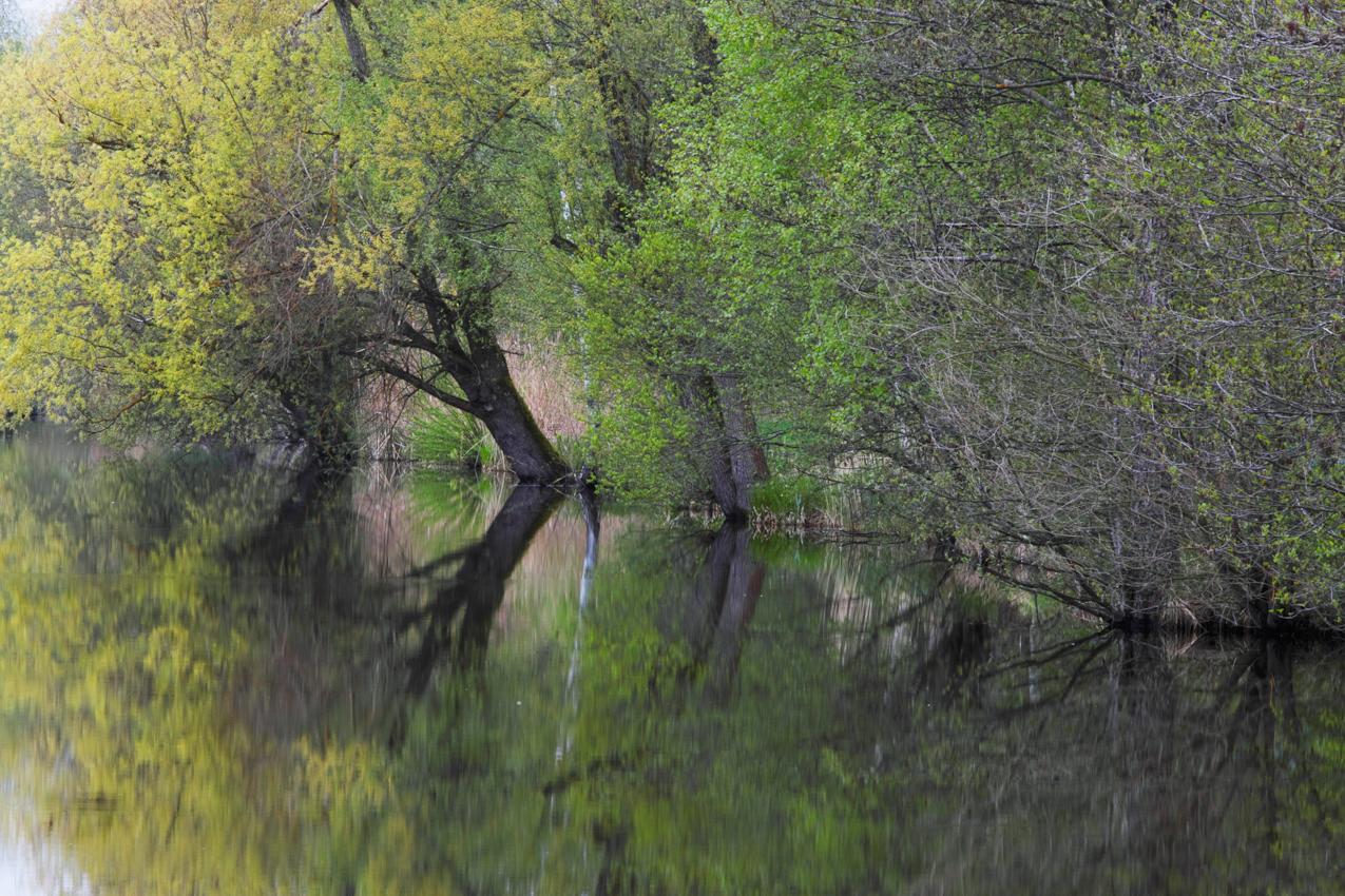 Das Pfrunger Burgweiler Ried ist ein großes Moorgebiet in Oberschwaben. Das Hochmoor ist weitgehend erhalten geblieben und hat heute zirka 150 ha Fläche. Es ist seit 1980 als Naturschutzgebiet ausgewiesen. Der Nillsee ist dursch die frühere Torfgewinnung entstanden.