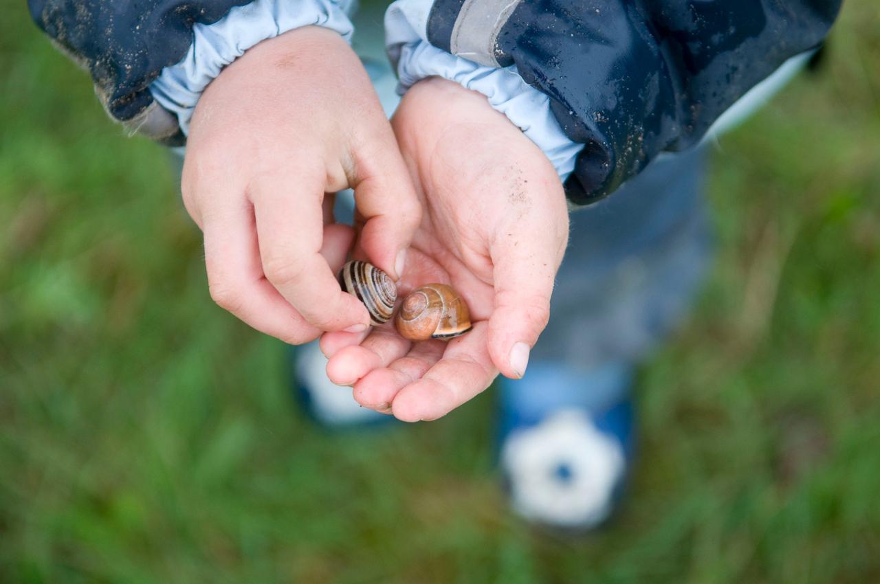 12:04 Uhr. Waldkindergarten Buxtehude. Bis zum Ende des Vormittags gab es doch keine Regenwürmer. Dafür hat Nikke auf dem Ruckweg zum Treffpunkt  zwei Schnecken gefunden. Auch wenn die gerade dabei waren, sich naher zu kommen - ein neugieriges Waldkind lasst sich so eine Gelegenheit der vorsichtigen Inspizierung nicht entgehen. Die anderen stehen staunend drum herum. Auf sehr natürliche Weise erlernen die Waldkinder so die Achtung vor Fauna und Flora, eine Eigenschaft, die sie auch im weiteren Leben prägt.