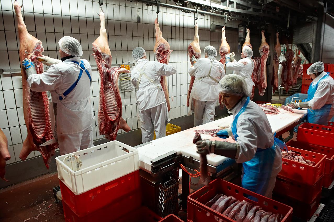 Schlachthof Vogler Fleisch LuckauSchlachthof der Firma Vogler Fleisch 29487 Luckau Ortsteil Steine, Wendland. Die angelieferten Tiere (hier Schweine) werden geschlachtet, ausgenommen und nach einer Nacht im Kühlhaus von polnischen Gastarbeitern zerlegt. Das Fleisch wird dann an die Kunden (z.B.Supermarktketten/Schlachtereien) geliefert. Nach einer Nacht im Kuhlhaus werden die Schweinhälften schrittweise von polnischen Zerlegetrupps zerteilt. Hier werden als erstes die Filets entnommen