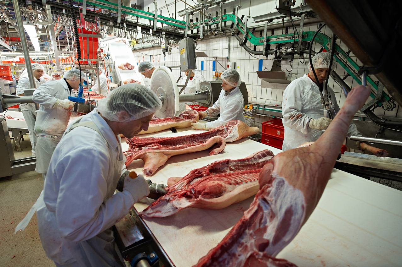 Schlachthof Vogler Fleisch LuckauSchlachthof der Firma Vogler Fleisch 29487 Luckau Ortsteil Steine, Wendland Die angelieferten Tiere (hier Schweine) werden geschlachtet, ausgenommen und nach einer Nacht im Kühlhaus von polnischen Gastarbeitern zerlegt. Das Fleisch wird dann an die Kunden (z.B.Supermarktketten/Schlachtereien) geliefert. Im Zerlegebereich wird zuerst der Schinken vom Rest getrennt.
