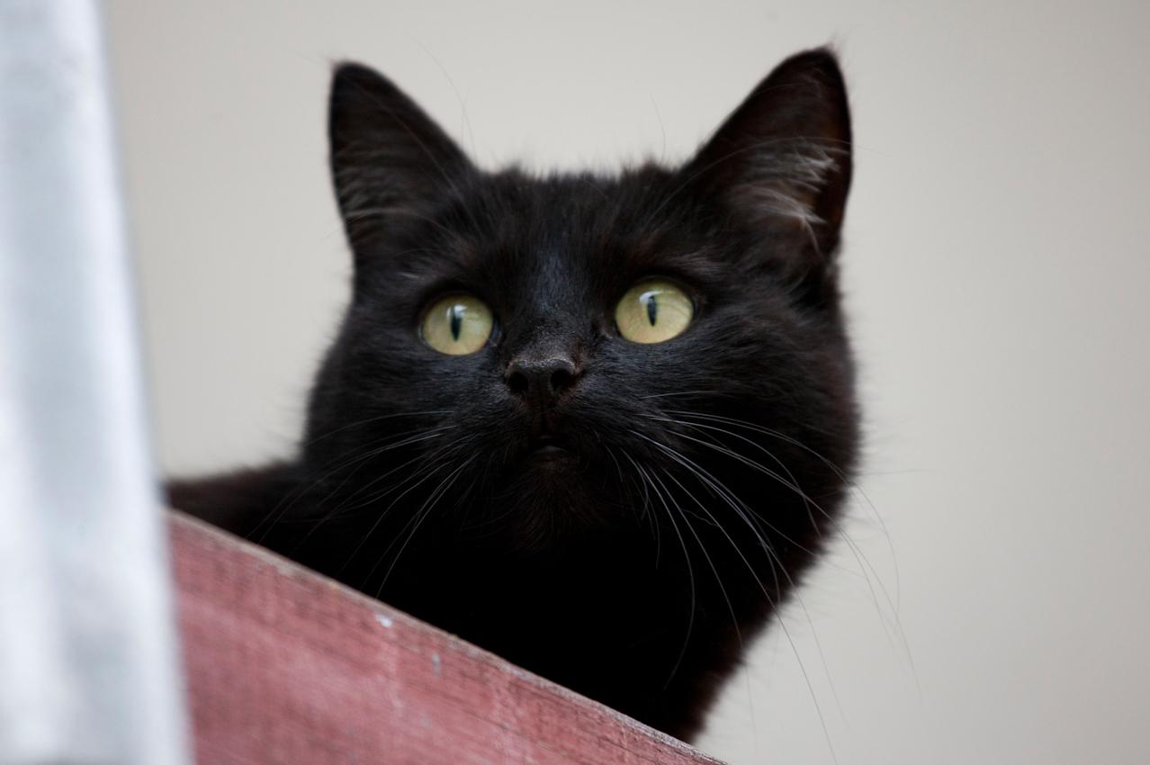 Abstatter Katze hoch oben auf einem Gerüst im Lerchenring um 17:53 Uhr.