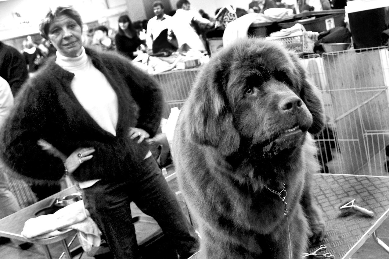 DEU, Deutschland, Dortmund, 07.05.2010, Eine Frau mit ihrem Hund bei einer Hundeausstellung.