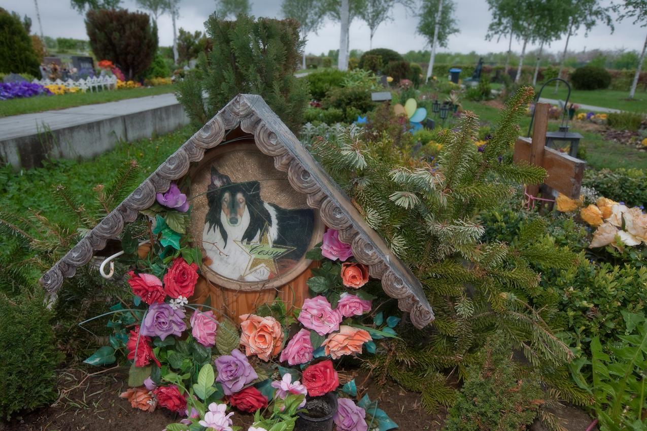 Hundegrab auf dem Tierfriedhof in Berlin Hohenschoenhausen Falkenberg angeschlossen an das Tierheim Berlin. Der Tierschutz-Verein für Berlin errichtete eines der größen und modernsten Tierheime  dieser Art weltweit.