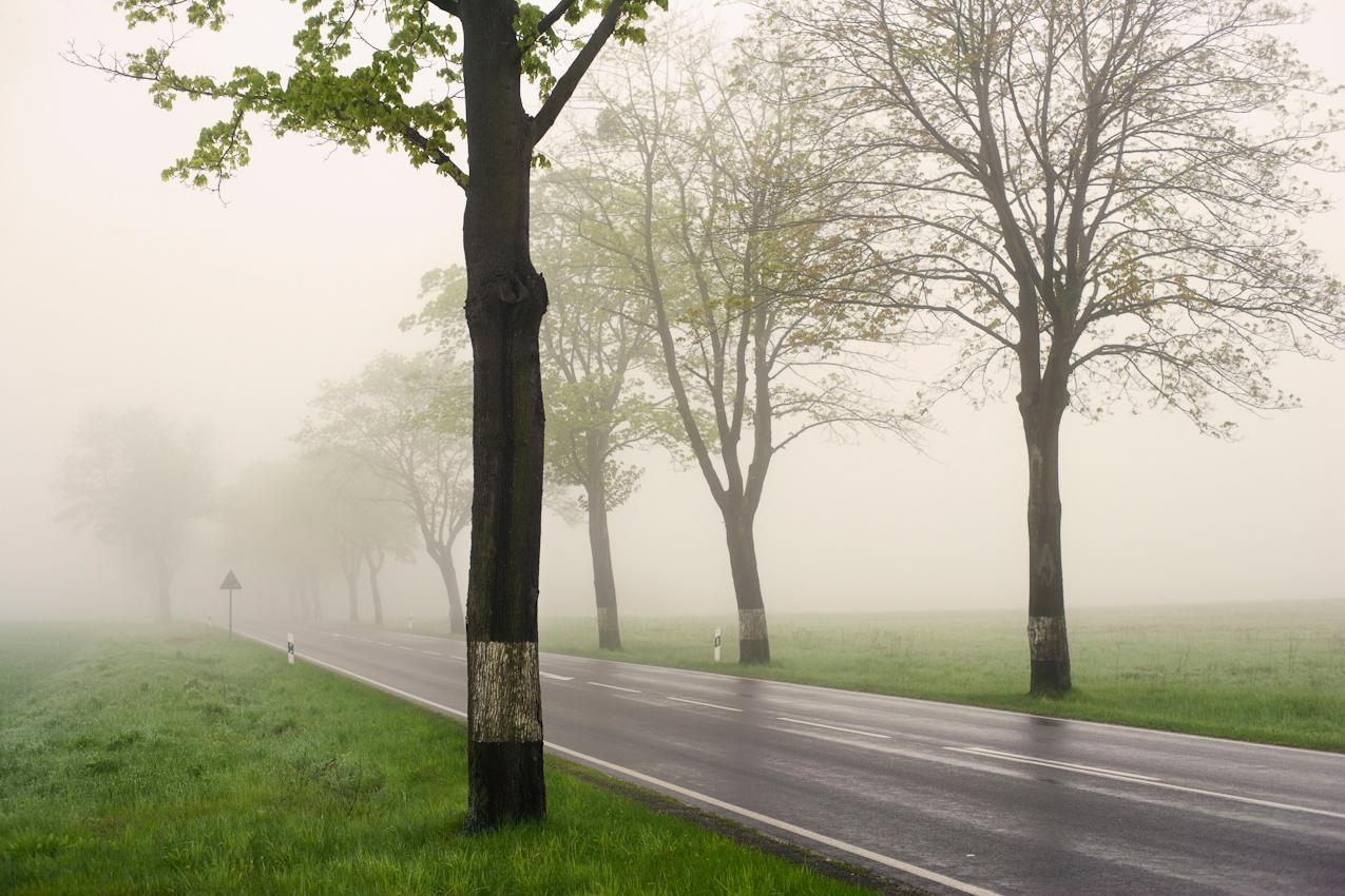 Strassenszene im Morgennebel an der Bundesstrasse 158 bei Platzfelde/Brandenburg.