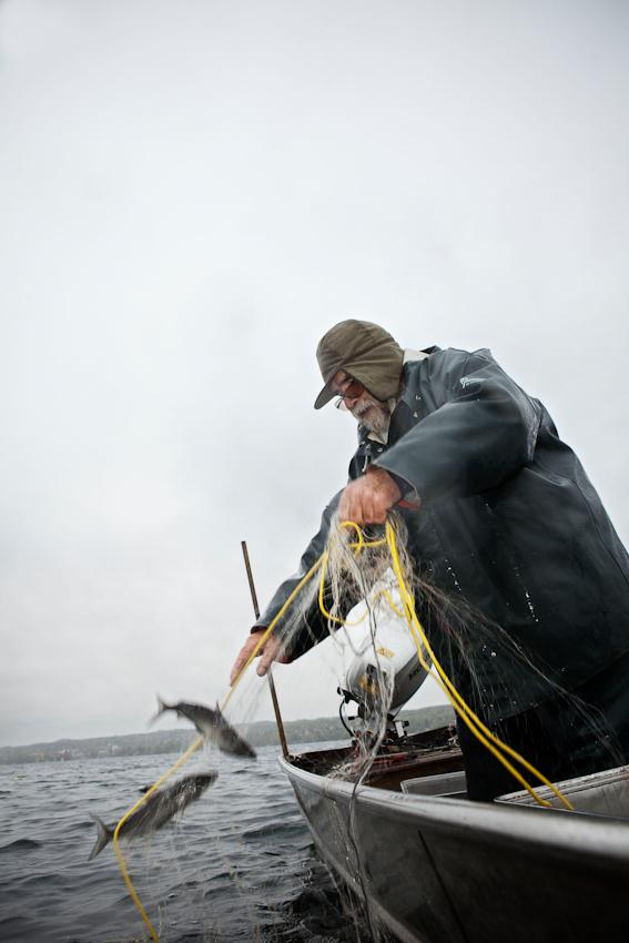 Der Fischer Johann Schuster am Vormittag des 7. Mai 2010 in seinem Boot auf dem Starnberger See. Hier holt er sein Netz mit 2 Renken ein.