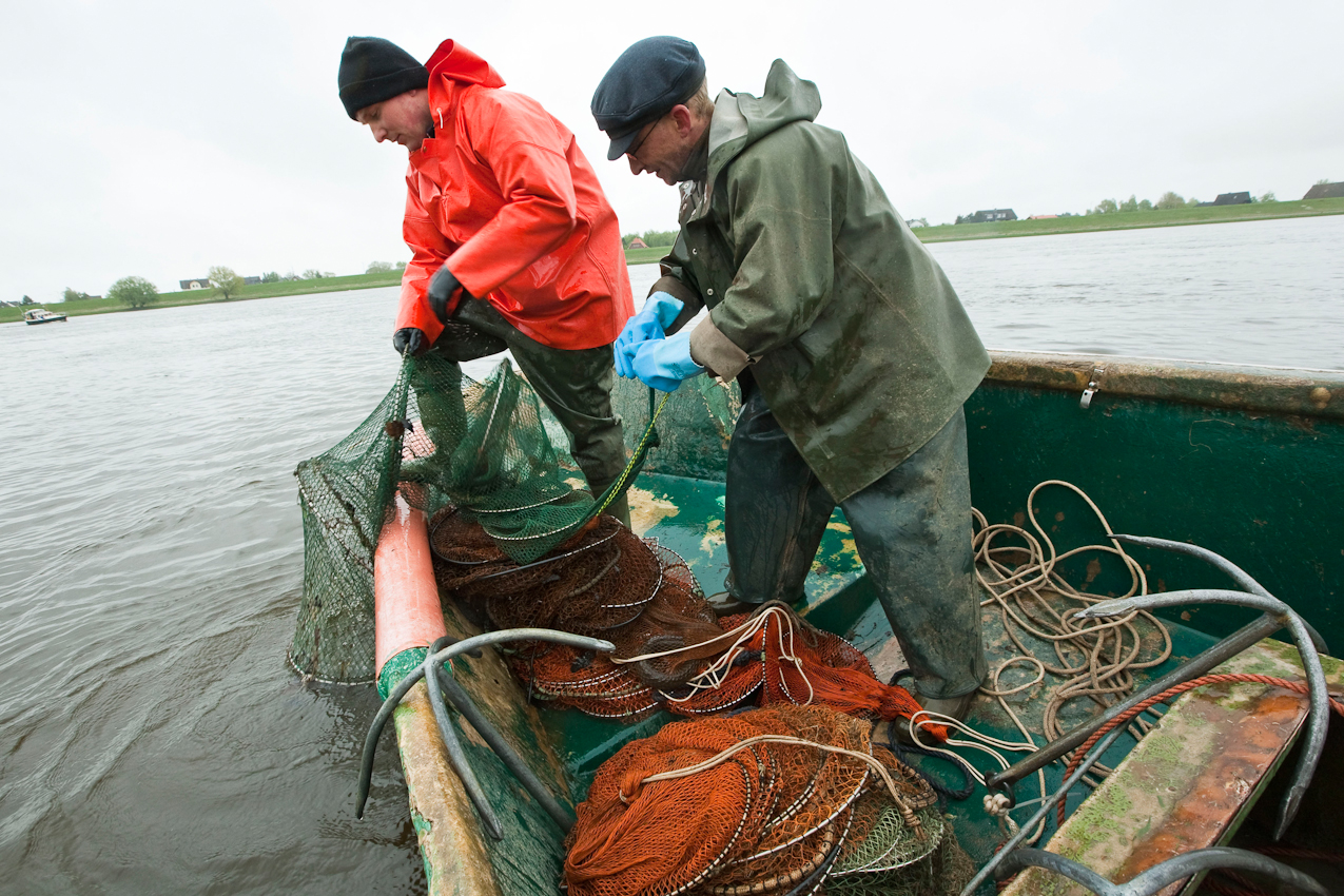 Der Fischer Hinnerk Groth (38, rechts) und der polnische Saisonarbeiter Roman Mielewczyk (25) - Angestellte bei der Fischerei Grube und Stoef GBR in Hoopte - fischen nach Aal in der Oberelbe bei Winsen/Luhe.