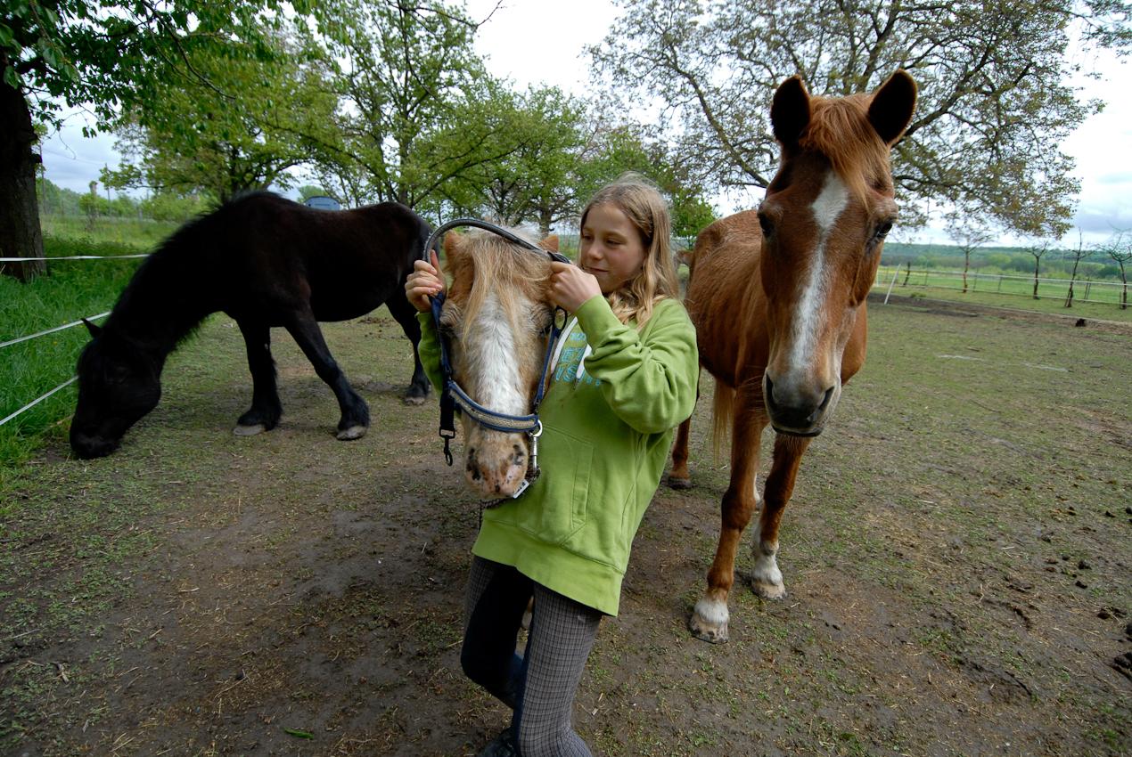 Violetta Mogwitz kommt regelmäßig auf den Reiterhof, aber das Anlegen des Halfters ist trotzdem noch oft ein kleiner Kampf.